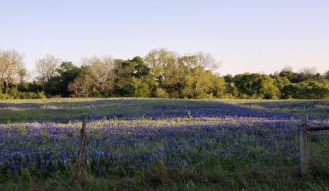 Clean Air Act Bluebonnets EPA